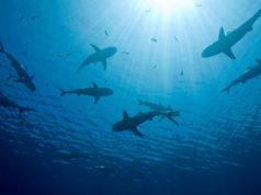 Świat rekinów