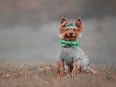 ubranie dla psa