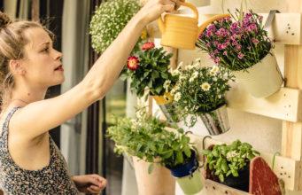 pielęgnacja kwiatów latem