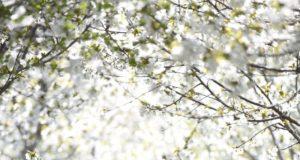Dziecko w szortach i tshircie biegnące przez wiosenny ogród