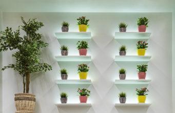 kwiaty w kolorowych doniczkach na półkach