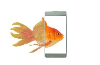 wyświetlacz złota rybka