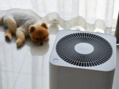 oczyszczacz powietrza obok leżącego na podłodze szczeniaka