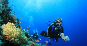 nurek rafa koralowa