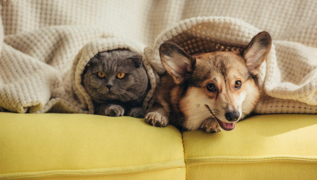 kot i pies na kanapie pod kocem