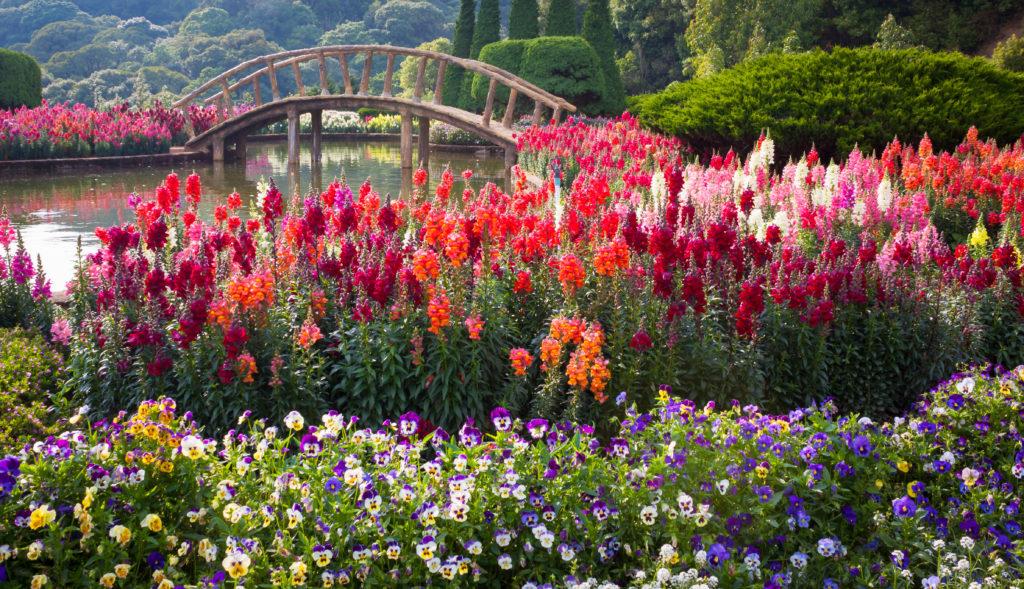Park Keukenhof w Holandii to największy i najpiękniejszy ogród wiosenny na świecie