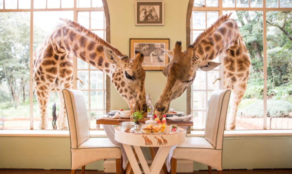 Giraffe Manor w Kenii