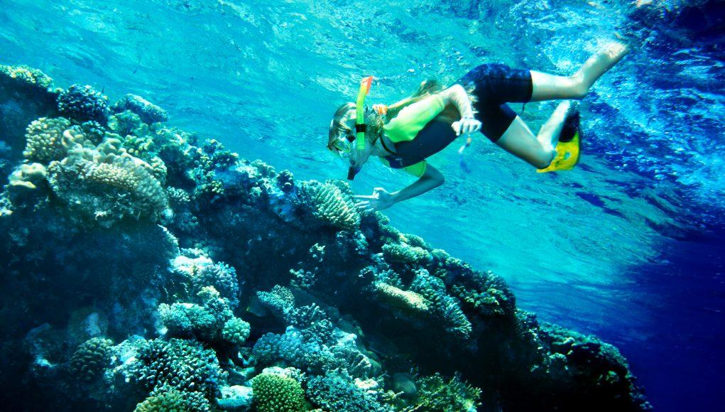 nurkowanie rafa koralowa